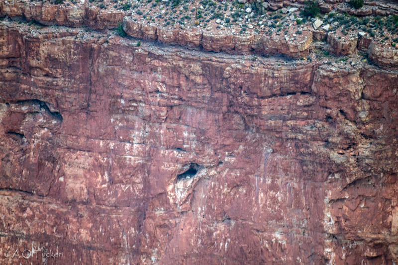 Condor Nest From Hopi Point - Grand Canyon Post