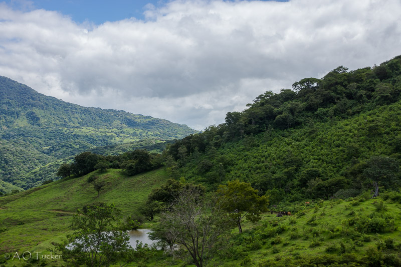 Lush Watering Hole - A Gringo In Nicaragua Post