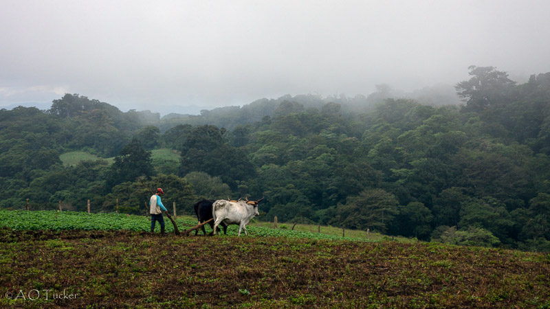 Turning The Soil - Gringo In Nicaragua Post