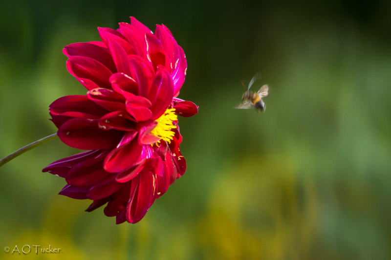 Bee In Motion