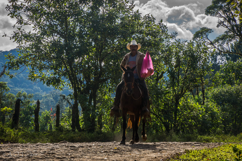 Banana Delivery By Cowboy - Gringo In Nicaragua Post