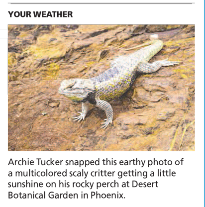 Rock Lizard Desert - Arizona Republic Weather Photo post