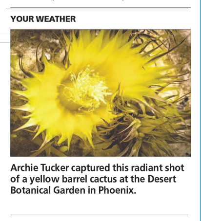 Yellow Barrel Cactus Swirl - Arizona Republic Weather Photo post