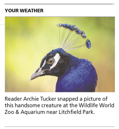 Crest Of The Peacock - Arizona Republic Weather Photo post