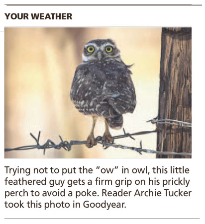All Turned Around - Arizona Republic Weather Photo 09/09/2014 - Burrowing Owl post