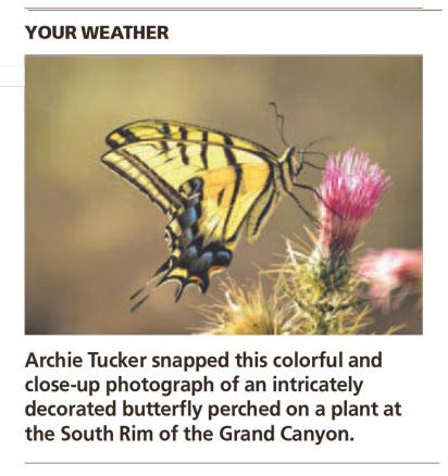 Swallowtail Luminance - Arizona Republic Weather Photo 09/09/2014 - Two-tailed Swallowtail Butterfly post
