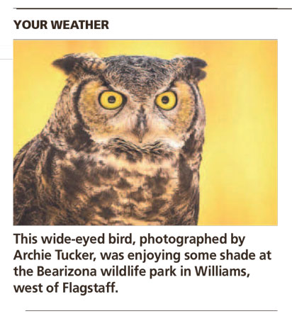 Bearizona George - Arizona Republic Weather Photo 09/22/2014 - Great Horned Owl post