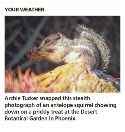 Prickly Treat - Arizona Republic Weather Photo 10/09/2014 - Antelope Squirrel post