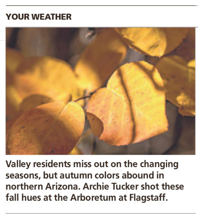 Autumn Leaves - Arizona Republic Weather Photo 11/08/2014 - Autumn Leaves post