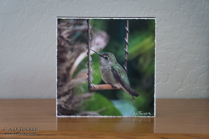 Hummingbird On A Swing - Sedona Arts Center Hummingbird Exhibit 2015 post