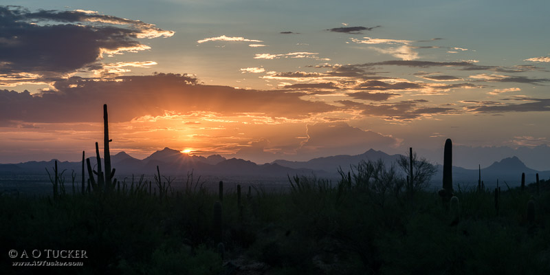 Painted Sunset From Saguaro National Park - Saguaro National Park - Tucson Arizona
